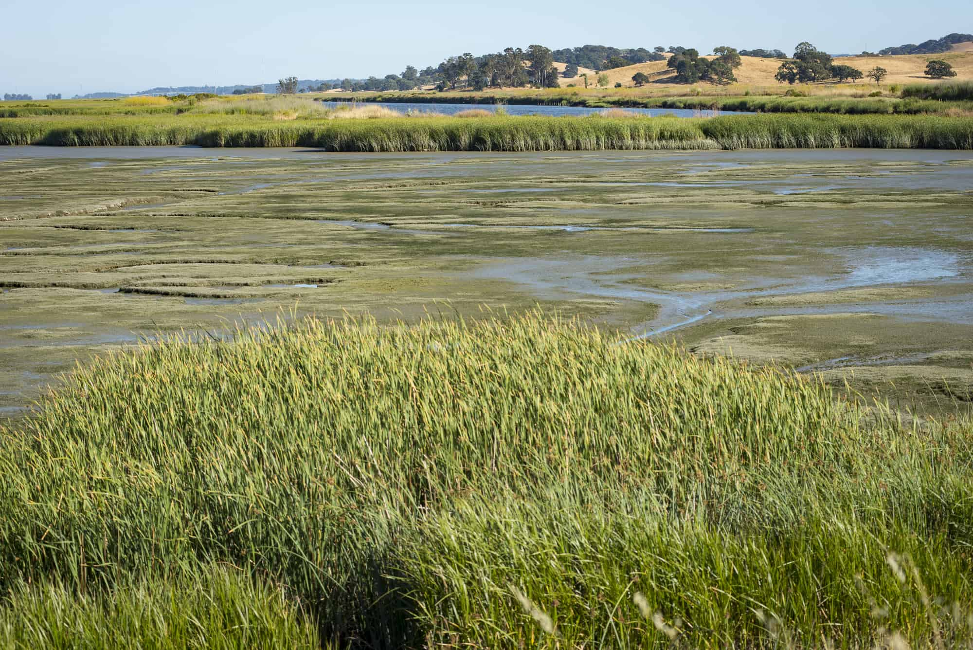 Pescadero Marsh Nature