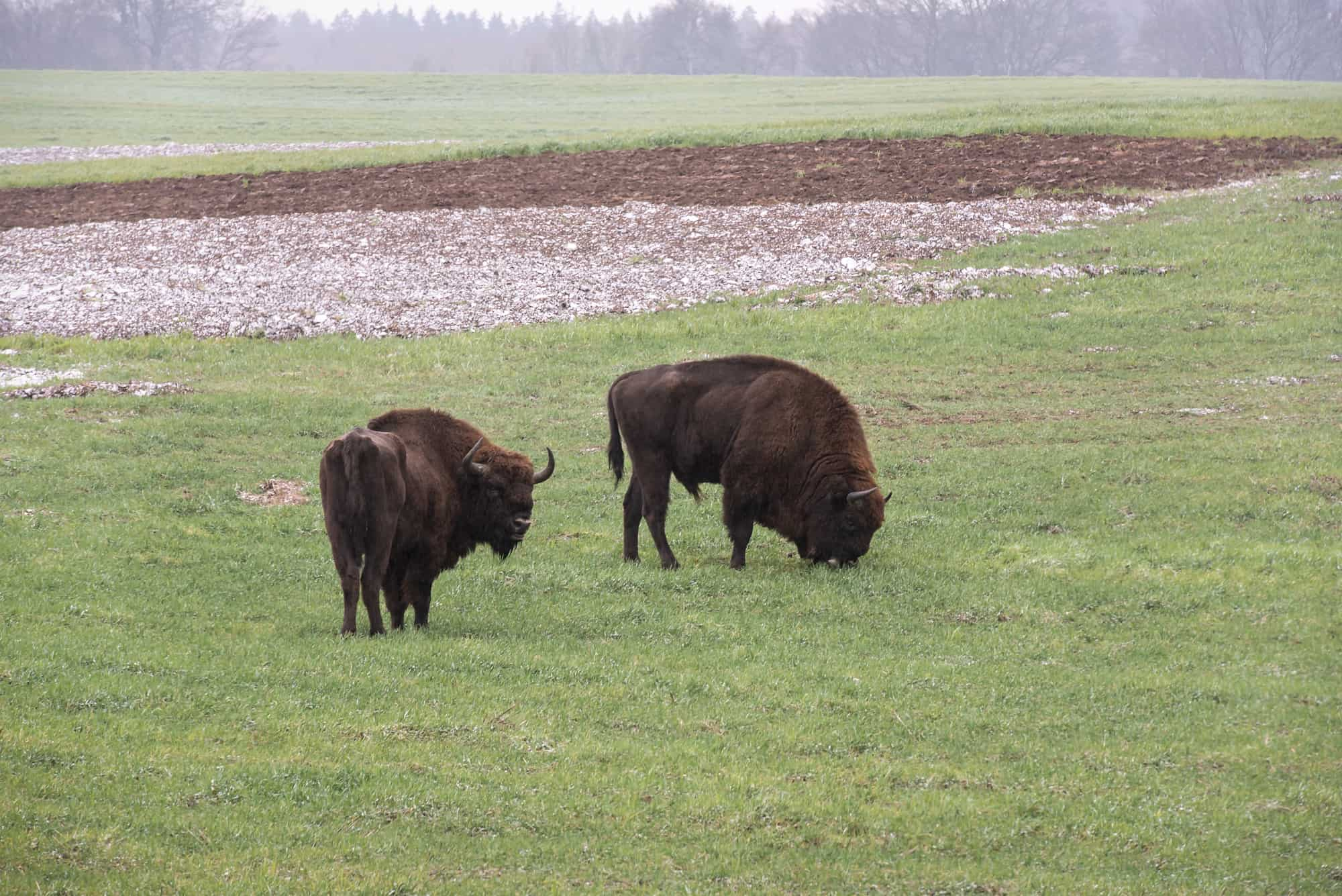 Win Tur Bison Farm