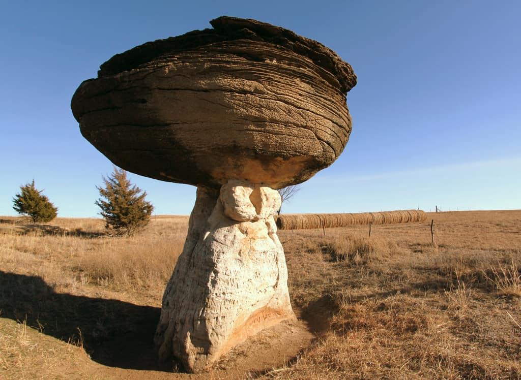 Mushroom State Park