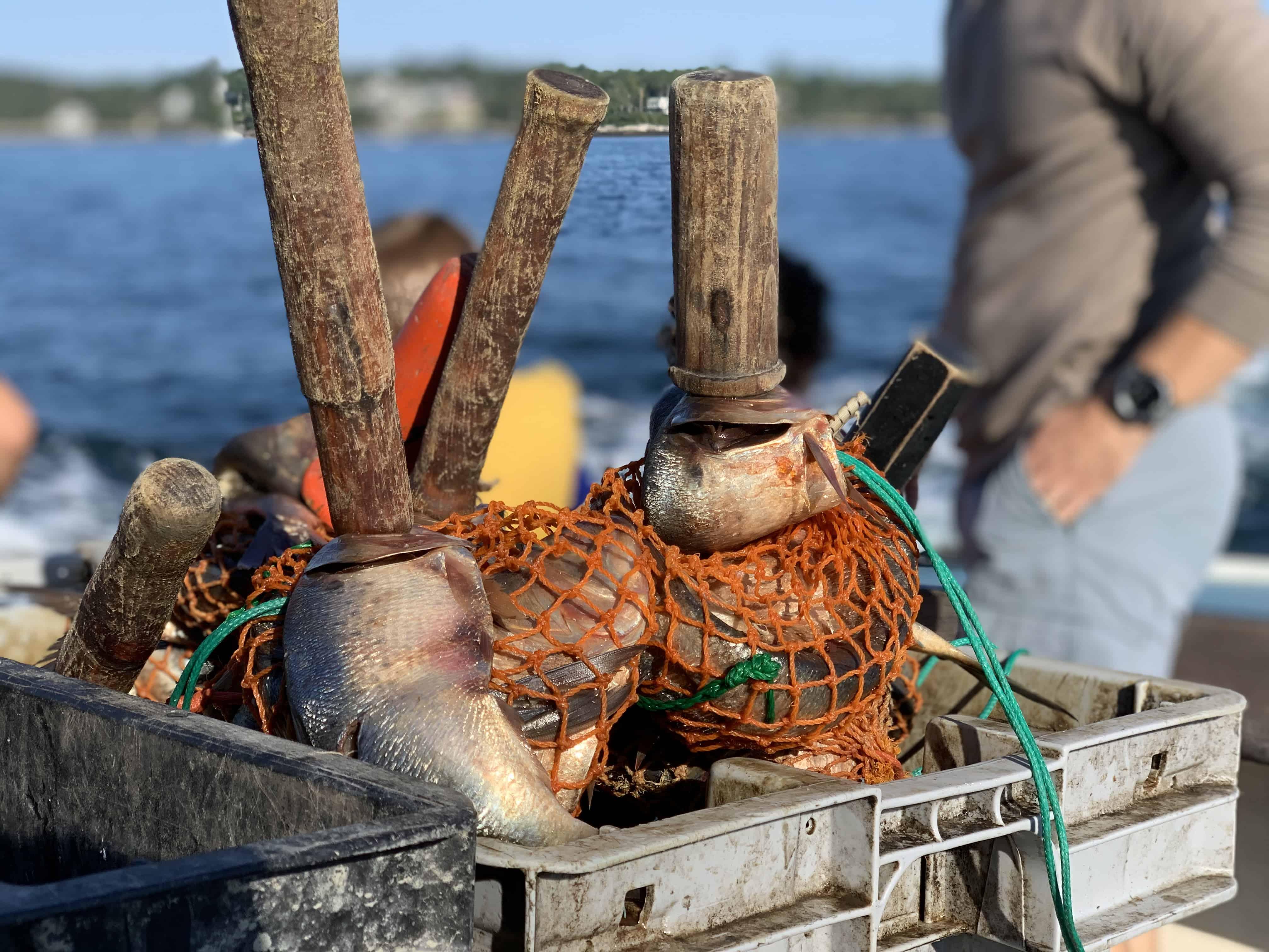 Lobstering bait