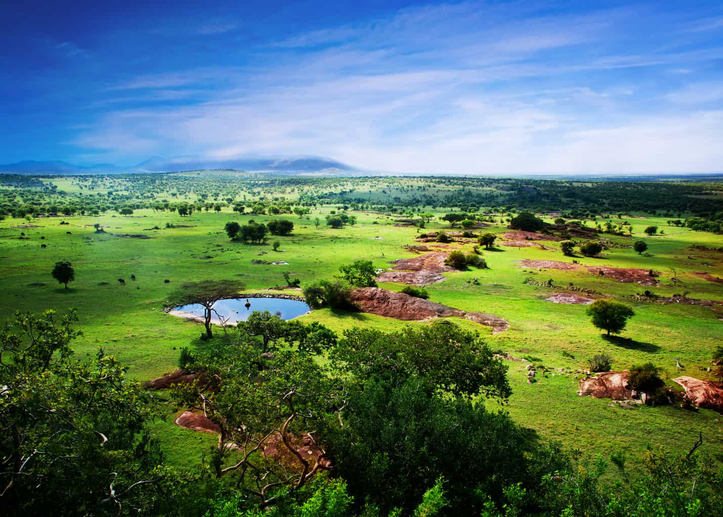 Savanna in Tanzania