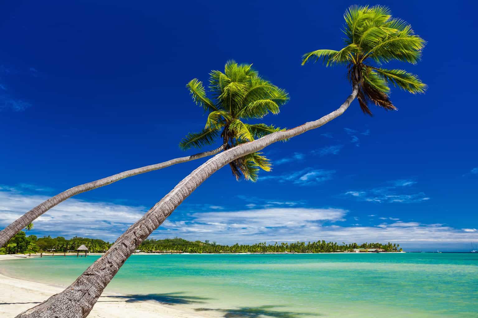 Palm trees on Fiji Islands